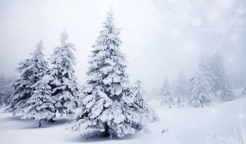 winter, снег, природа, елки, деревья, года, есть, времена,