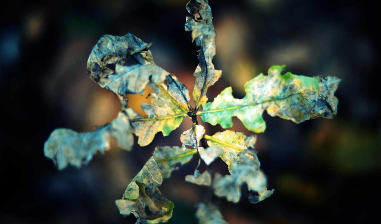 осень, макро, лист, сухой, скрюченный,