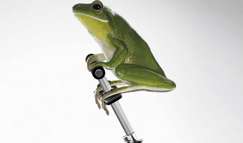 fun, vixiz, pics, frog, this, having, креатив, funny, słabe, you, телефон, mocne, more, images,
