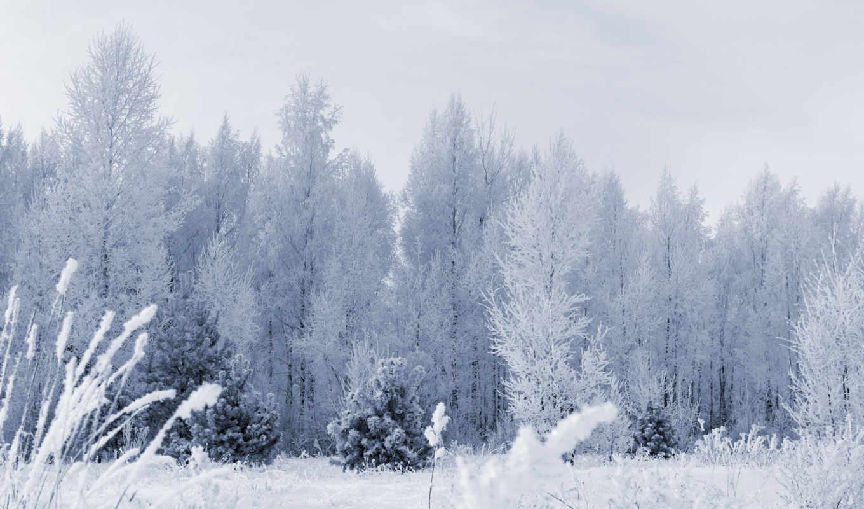 frozen, лес, desktop,