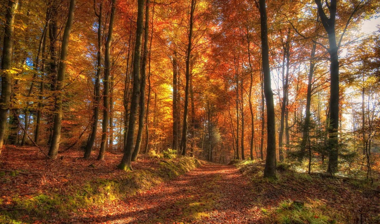 osen, les, priroda,