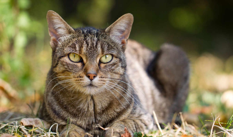 гифки, кошки, котэ, тюлень, анимация, гифка, гиф, gif, anime, милота, коллекция,