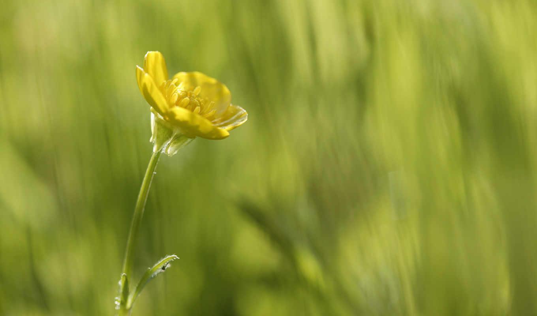цветочек, small, yellow, цветы, цветами,