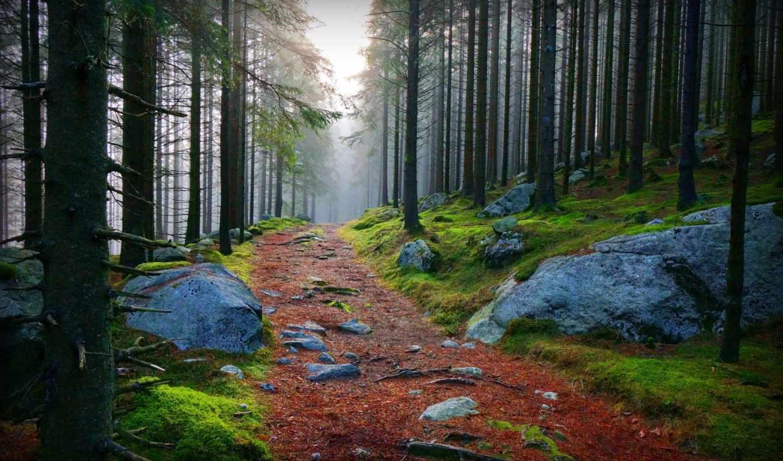 лес, камни, дорога, приода, картинка,
