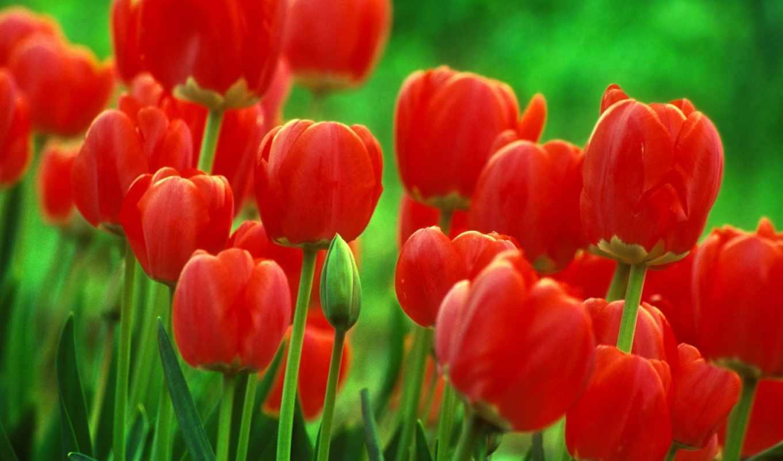 cvety, цветок,