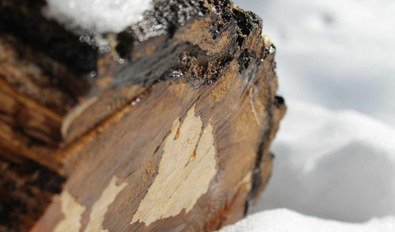winter, серьги, утро, макро, zhivotnye, leaf, stump, совёнок,