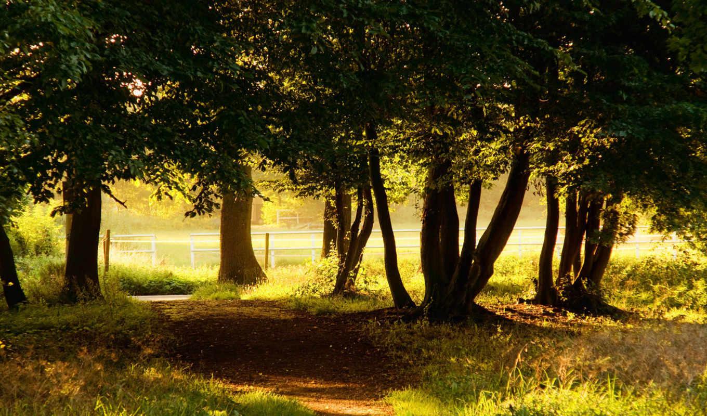 деревья, природа, парк, смотрите, картинка, love,