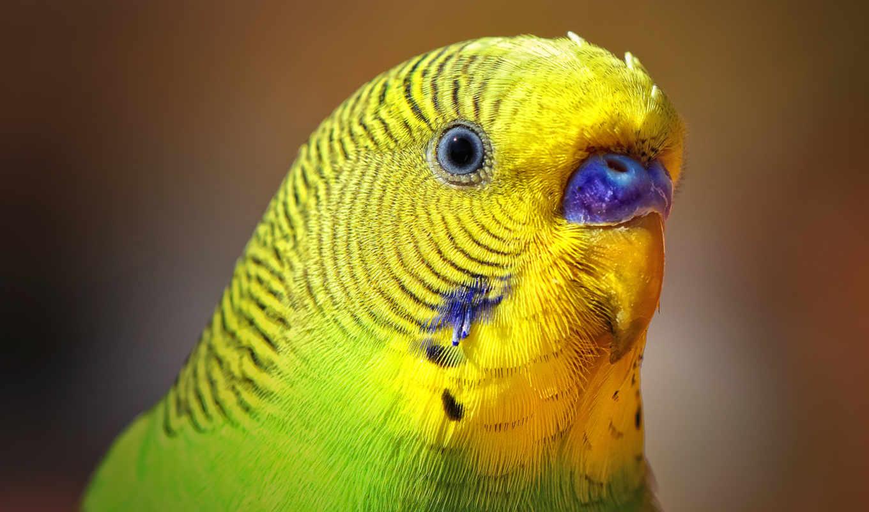 ,попугай,птицы,желтый