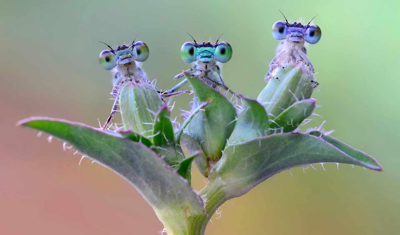 , насекомые, веточка, жуки, стрекоза, глаза,