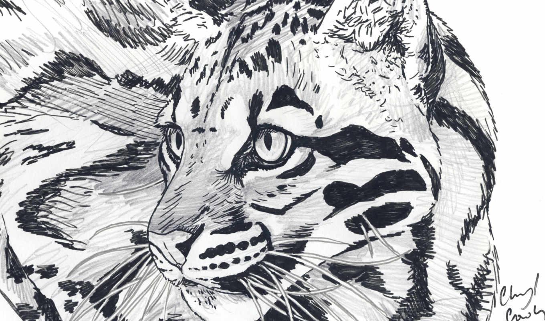хищник, леопард, animal, взгляд, art, усы, pencil, картинка,