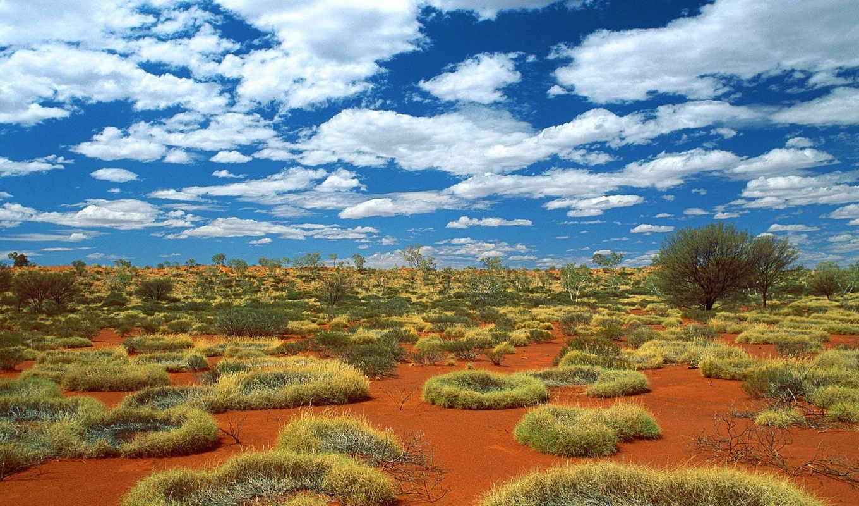 австралии, world, animal, животных, природа, австралия, природы,