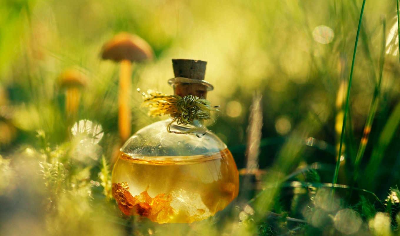зелье, трава, отражение, духи, сосуд, натуральные, картинка, подборка,