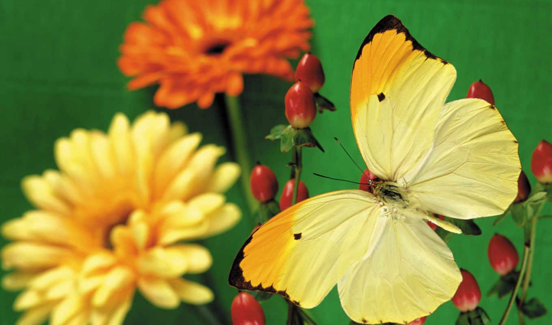 бабочка, кб, zhivotnye, превью, февр,