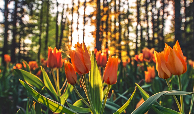 flowers, цветы, widescreen, resolutions, high, desktop,