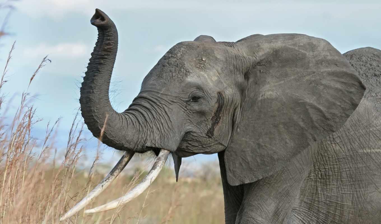 животных, african, слоны, мире, animals, zhivotnye, тест, дроны, free, images,