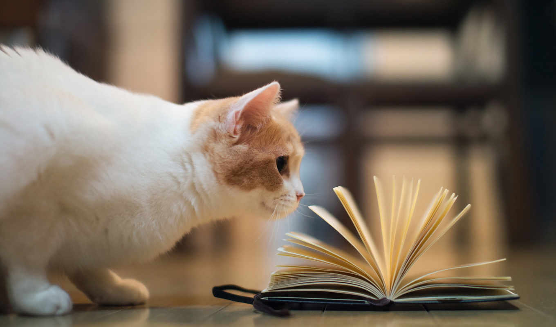 кот, книга,