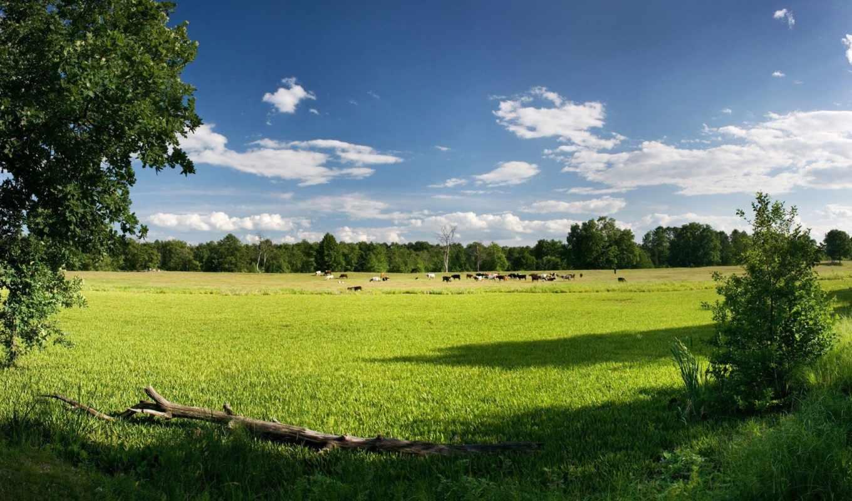 trees, zhivotnye, природа, коровы, небо, пейзажи -, картинка, трава, растения, фото,