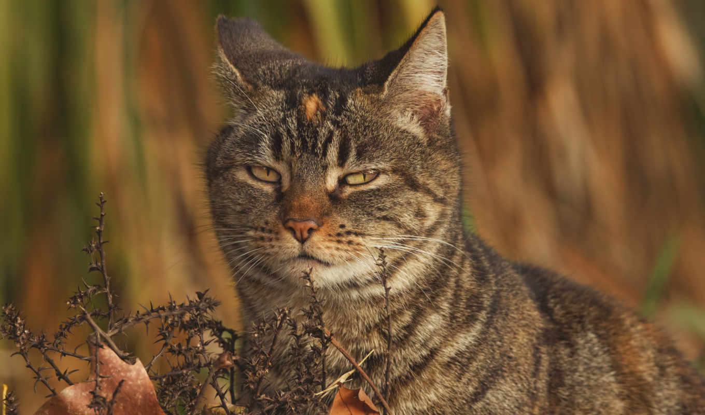 zhivotnye, кошки, imagini, desktop, взгляд, кот, und,