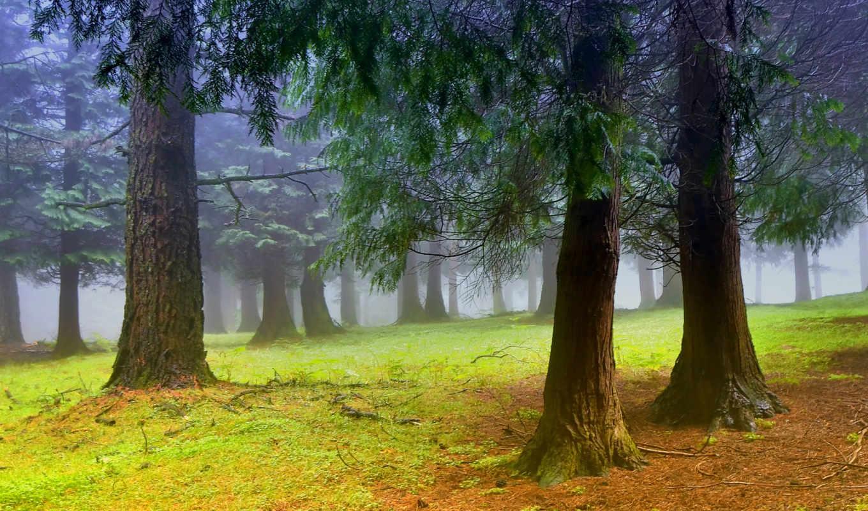 лес, туман, дымка, деревья, утро, смотрите,