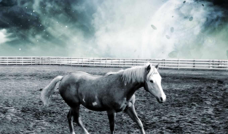 лошадь, лошади, мышку, лисы, превью, наведите, картинку, разместите, компьютера,