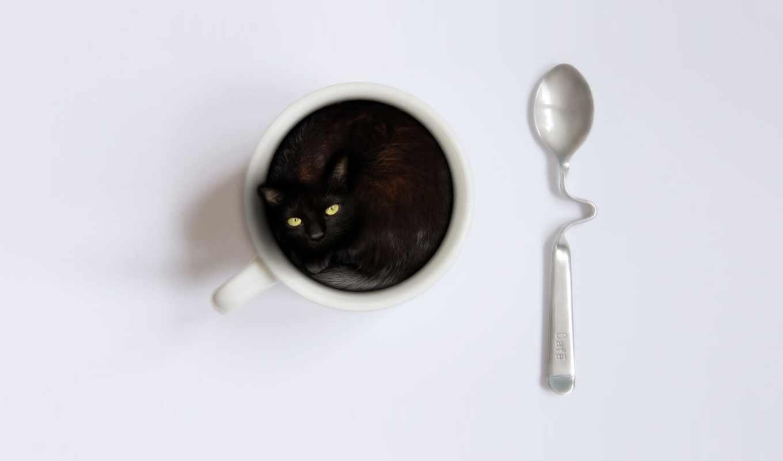 кошки, котенок, подборка, cup, ложка,
