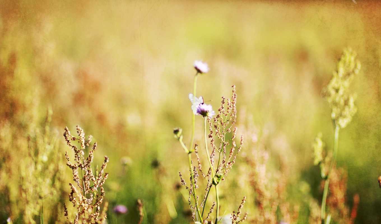 природа, категории, минимализм, макро, цветы, лес, поле,