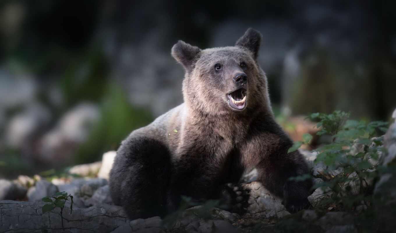 медведь, смотреть, id, глаза, волк, бурундук, moderation, arctic
