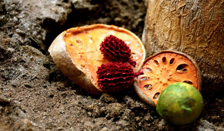 плоды, земля, фрукты, картинка, dry, fruit,