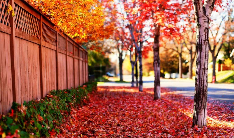 дерево, весна, пейзаж, листья, деревья, природа, flower, carpet,