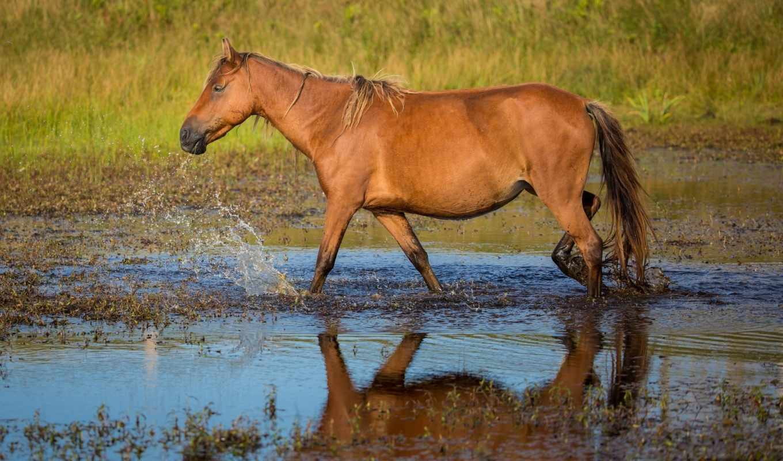 water, лошади, лошадь, смотреть, обою, размере, брызги, истинном,