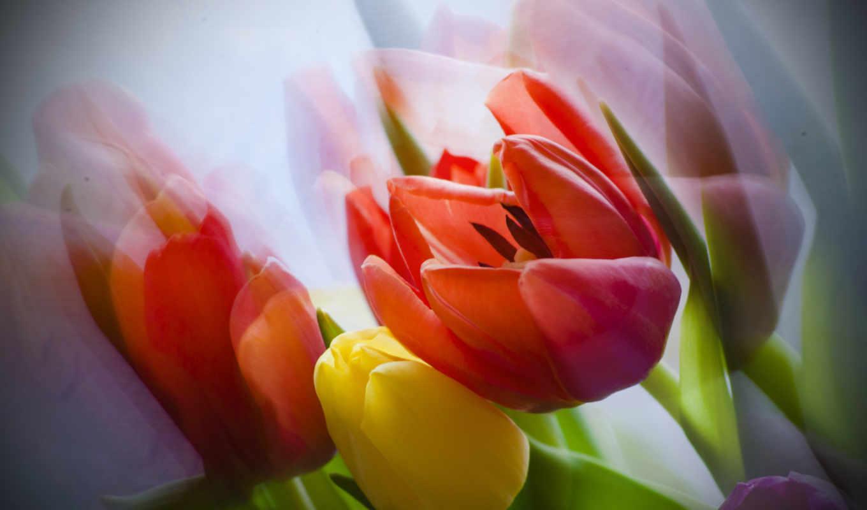 качестве, тюльпаны, блог, цветы, высоком, букет, друзей,