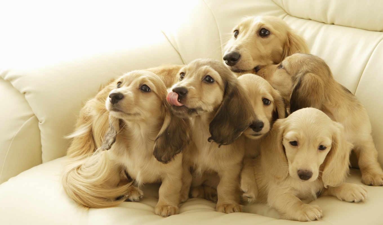 собаки, thank, марта, красивые,