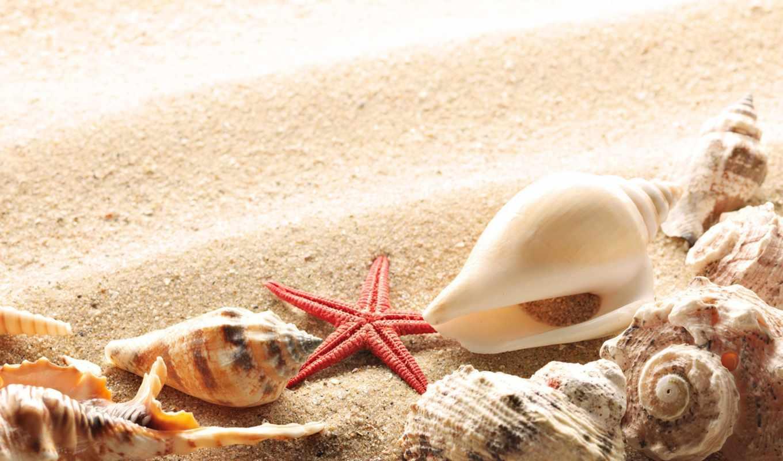 ракушки, песок, summer, берег, sun,