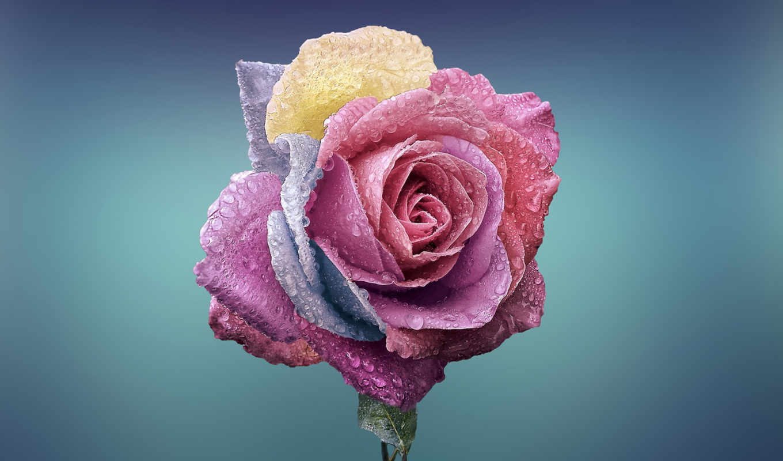 fondos, pantalla, gotas, colorido, descargar, роза, agua, gratis, para, escritorio,