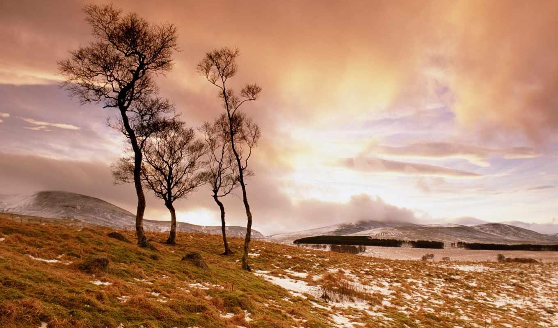 одинокие, trees, весной, природа, among, наперекор, одинокое, дерево,