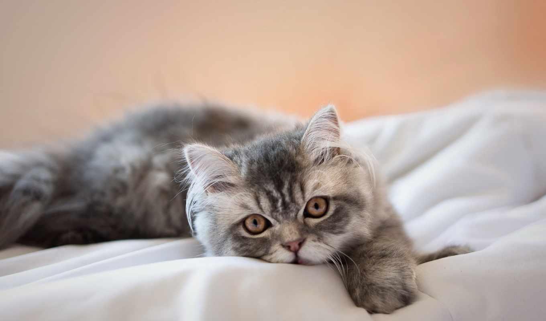 кот, images, lifestyle, mixture,