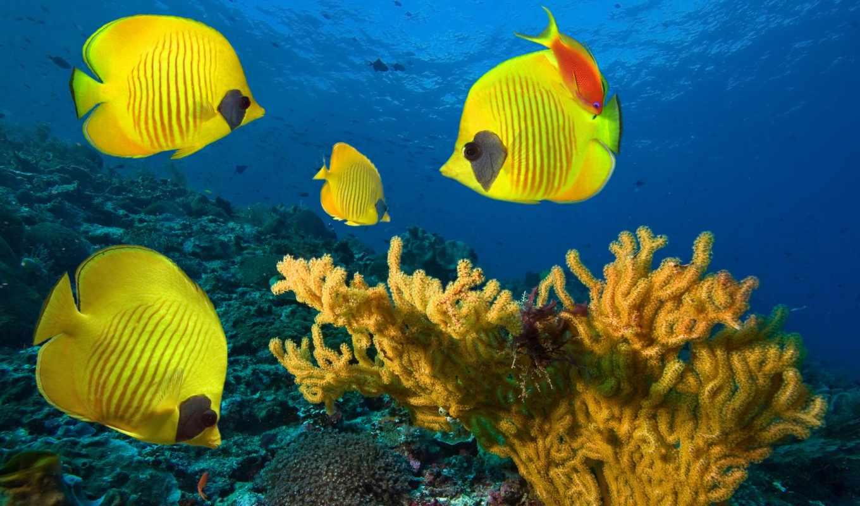 рыбки, фотообои, купить, желтые, стену, интернет, высокого, печатаются, качества, материалах, другие,