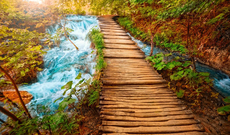 world, осенью, прекрасен, золотистый, вообще, природа, фотопечать, лес,