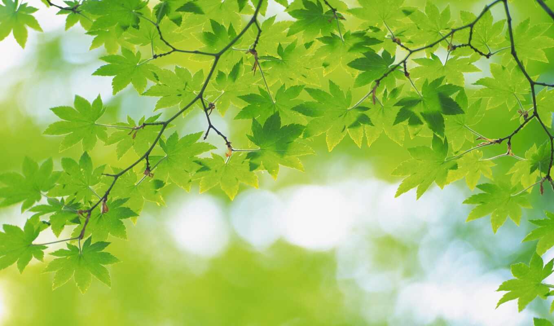 funart, greenery, презентация, фон, oir, profon