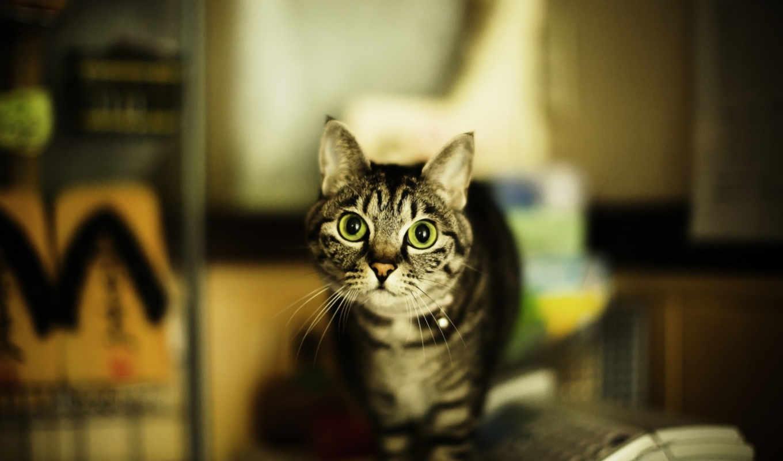 кошка, взгляд, дом, картинка, картинку,