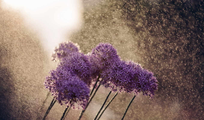 цветы, дождь, красиво,