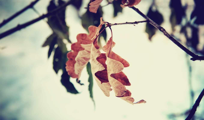 осень, osen, season, листья, листья, природа,