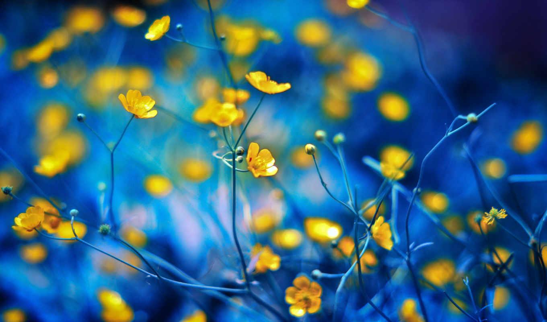 цветы, телефон, нежном, цветами, желтые,