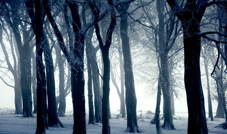 лес, winter, снег, деревя, снегом, природа, разных,