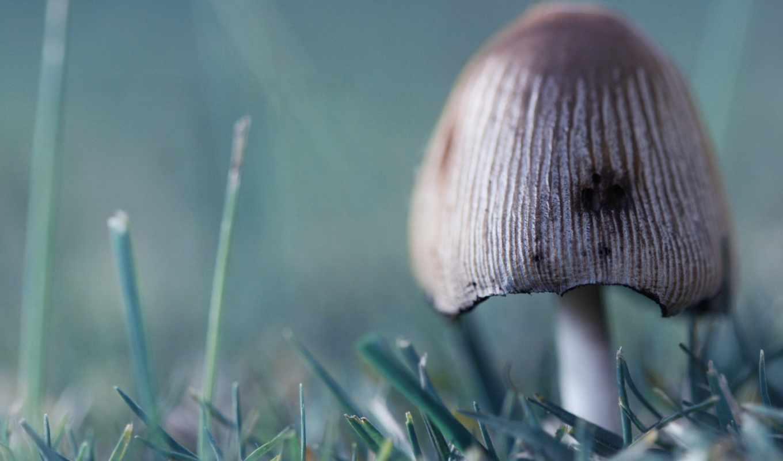 mushroom, шляпа,