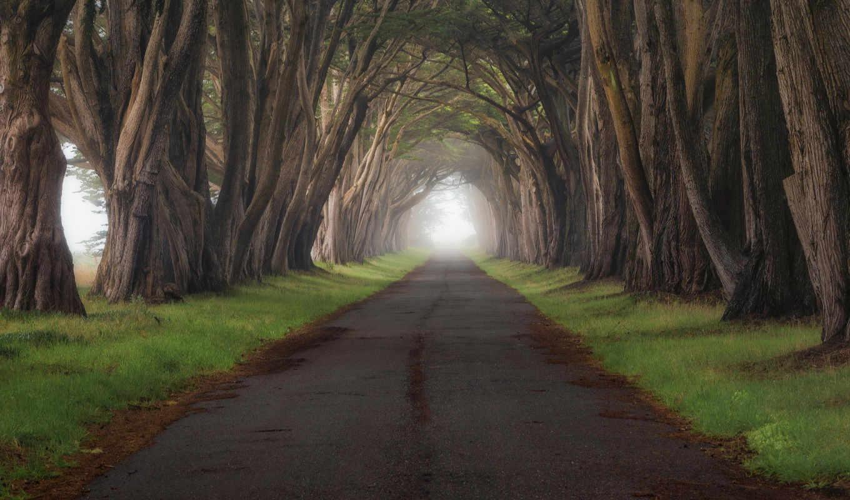 деревьев, туннели, share, туннель, природы, часть, июня, дерево,