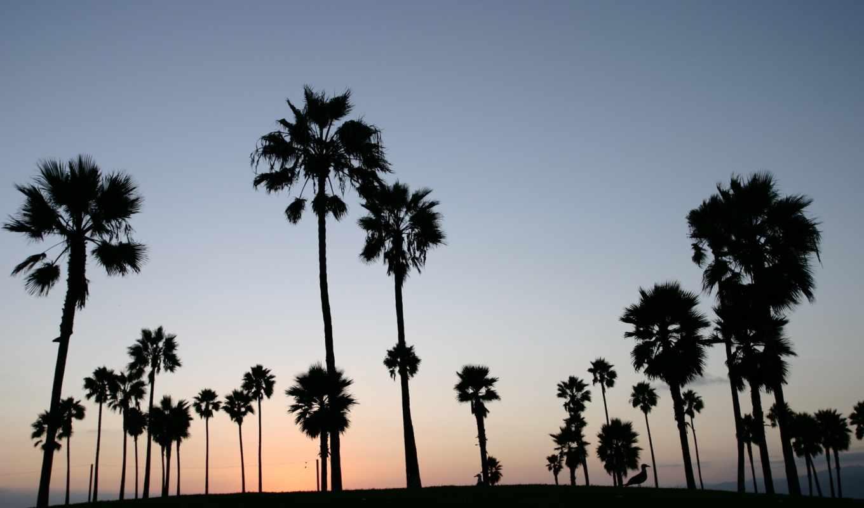 пальмы, небо, palm, свой, tropical, силуэты, пляж,