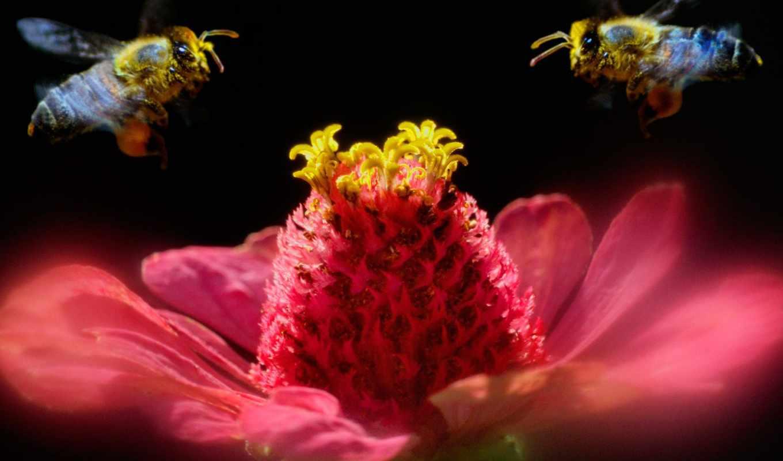 free, красивые, животных, природы, насекомые,