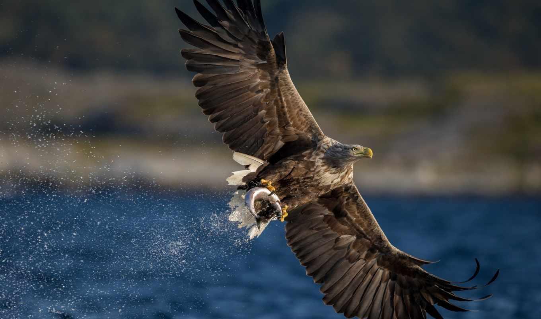 hawk, птица, хищник, zhivotnye, prey, изображение, птицы, украшения,