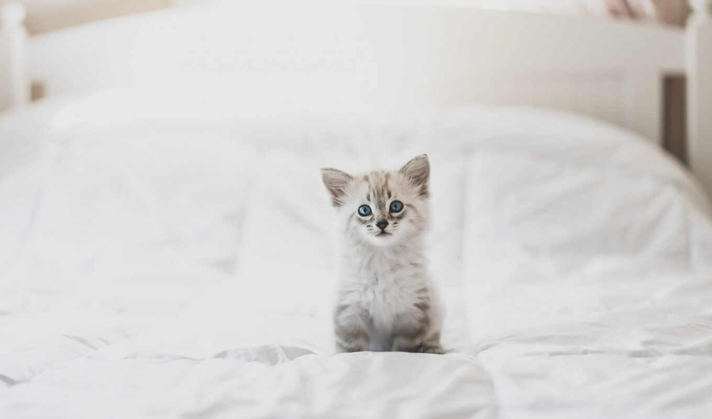 кот, котенок, small, пушистый, white, cute, animal